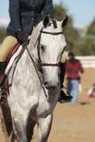 Elegante Paard en Ruiter Stock Foto