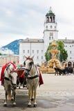 Elegante paarden in Salzburg stock fotografie