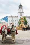 Elegante Pferde in Salzburg stockfotografie