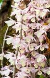 Elegante purpere en witte orchideeën Stock Afbeeldingen