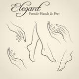 Elegante Schattenbilder von weiblichen Händen und von Füßen lizenzfreies stockbild