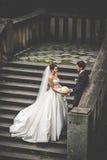 Elegante stilvolle junge Paare Stockbild