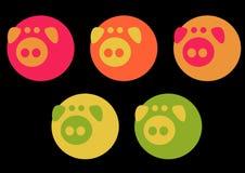 Elegante varkens Stock Foto's