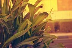 Elegante Verse Groene Lange Bladeren, Doubai op 22 februari 2017 Stock Afbeeldingen