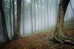 Elegante Waldabbildung mit Bäumen und Nebel Lizenzfreies Stockbild