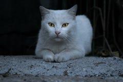 Elegante weiße Katze Ausdruck, Tiere stockfotografie