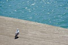 Elegante weiße Möve, die das Meer vom Dock von Barcelona-` s Hafen aufpasst Lizenzfreies Stockbild