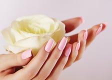 Elegante weibliche Hände mit Rosa manikürten Nägeln Schöne Finger, die rosafarbene Blume halten Leichte Maniküre mit Licht Polnis lizenzfreies stockbild