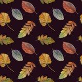 Eleganter Herbstlaub f?r unterschiedlichen Farbentwurf Nahtloses Aquarellmuster von bunten Bl?ttern stock abbildung