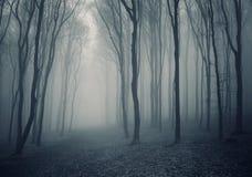 Eleganter Wald mit Nebel Stockfotografie