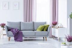 Elegantes Wohnzimmer mit großer bequemer grauer Couch mit Olivgrünkissen und violetter Decke in der Mitte lizenzfreie stockfotografie