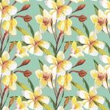 Elegantie naadloos patroon in uitstekende stijl met Plumeria-bloemen Tropische illustraties stock illustratie