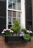elegantt fönster för ask arkivfoto
