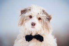 Elegantt gulligt förföljer att ha på sig en tie - stående royaltyfria bilder