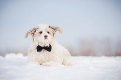 Elegantt gulligt förföljer att ha på sig en tie royaltyfri bild