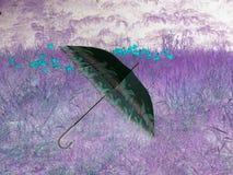 Elegantt paraply arkivfoton