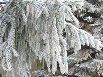 Eleganza della neve Fotografie Stock Libere da Diritti