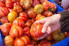 Elegir los tomates en un mercado Imagenes de archivo