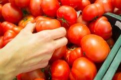 Elegir los tomates en una parada del mercado Fotos de archivo libres de regalías