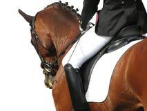Elegância do Dressage (com trajeto) Fotos de Stock Royalty Free