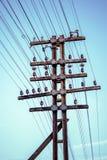 Elektriciteitsdraden stock afbeelding