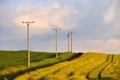 Elektriciteitspolen op een landbouwgebied Stock Fotografie