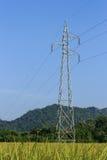 Elektricitetsstolpe i risfält Arkivfoto