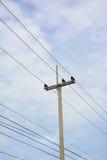Elektricitetsstolpe och blå himmel Arkivfoto