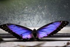 Elektrische blauwe vlinder Royalty-vrije Stock Afbeelding
