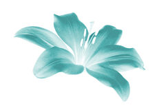Elektrische Blume Stockfotografie
