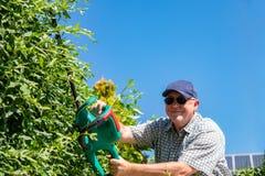 Elektrische Gartenarbeitwerkzeuge Ein Berufsgärtner schneidet eine Hecke mit einer elektrischen Heckenschere Gartenarbeit und Tät stockbilder