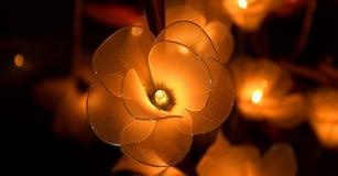Elektrische glanzende bloemen Stock Foto's