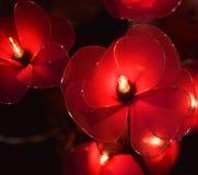 Elektrische glanzende bloemen Royalty-vrije Stock Afbeeldingen