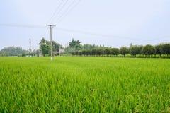 Elektrische Pfosten im Reis fängt nahe kleinem Dorf auf Lizenzfreie Stockfotografie