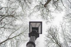 Elektrische Taschenlampe der Straße im Park Oberseiten der Bäume Moskau, t Lizenzfreies Stockfoto