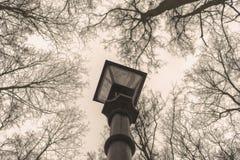 Elektrische Taschenlampe der Straße im Park Oberseiten der Bäume Moskau, t Lizenzfreie Stockfotos