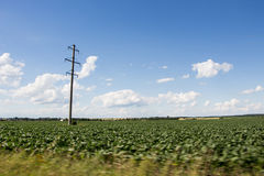 Elektrischer Pfosten und grünes Feld Lizenzfreie Stockfotografie