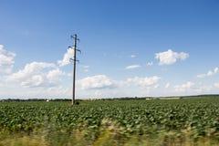 Elektrischer Pfosten und grünes Feld Lizenzfreies Stockbild