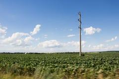 Elektrischer Pfosten und grünes Feld Lizenzfreies Stockfoto