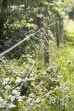 Elektrischer Zaun und Natur, Schweden Stockfoto