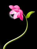 elektrisk blommalotusblomma Royaltyfri Fotografi