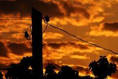 Elektrisk kolonn på soluppgången Arkivfoton