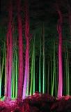 Elektrisk skog - Thetford, Norfolk, UK Royaltyfria Bilder