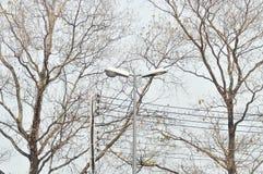 Elektrisk stolpe- eller elektricitetspol nära träd Fotografering för Bildbyråer
