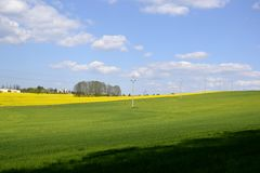 Elektriska poler med ett grönt fält Arkivfoto