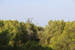 Elektriska poler och träd Royaltyfria Foton