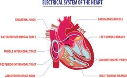 Elektriskt system av hjärtaarbetsillustrationen royaltyfri illustrationer