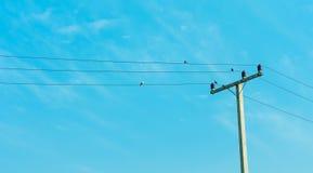 Elektrizitätspfosten im blauen Himmel mit Vogel auf Seilzug Stockbilder