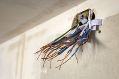 Elektro blootgestelde verbonden draden die van contactdoos op witte muur uitpuilen Elektro bedradingsinstallatie Het eindigen de  stock afbeelding