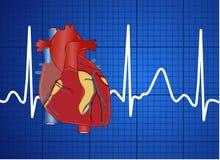 Elektrocardiogram Stock Fotografie